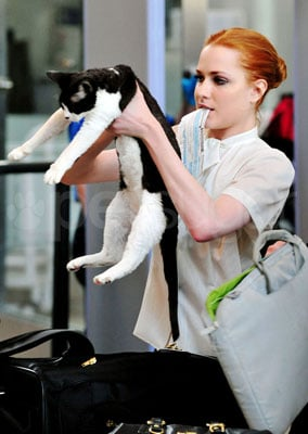 Nicodemus Is a Feline Flier With Evan Rachel Wood