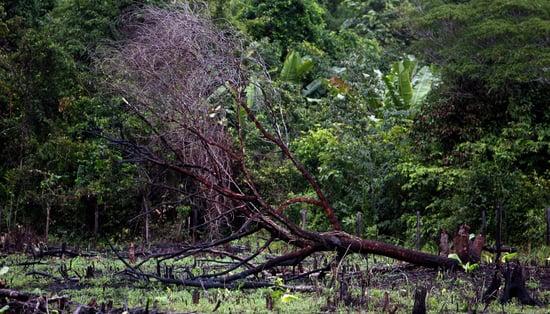 Eco Paradox: Clean Air Bad for Rain Forest?
