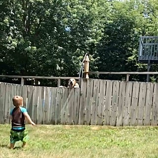 Toddler Plays Fetch With Neighbor's Dog