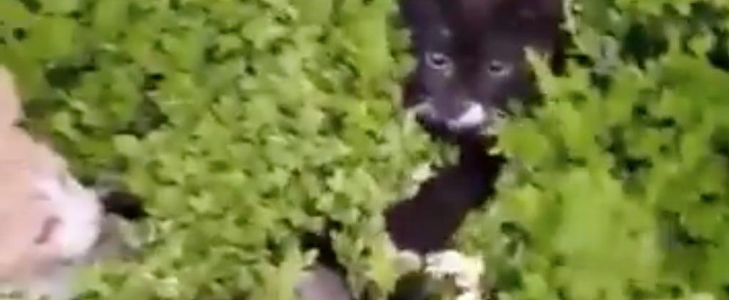 Cats Hiding in a Bush Viral Video