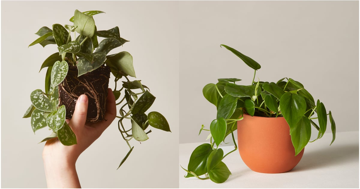 50 Hanging Plants That Will Transform Your Home Into a Picture-Perfect Greenhouse