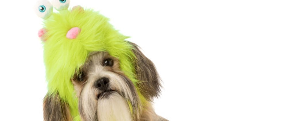 PetSmart's 20 Best Costumes For Dogs