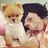 Katy Perry cozied up to Jiff the Pomeranian. Source: Instagram user katyperry