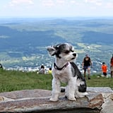 I made it to the top of Mount Greylock!