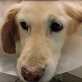 Dog Loses Paws in South Korea Meat Market | Video