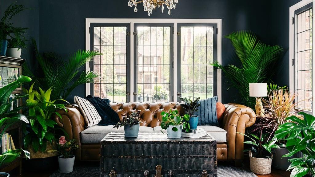 Plant-Lover Living Room Zoom Background
