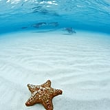 You Can Hang With Starfishes at Starfish Point