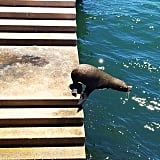 We stumbled across this little guy on our travels. Sydney's resident seal is back!
