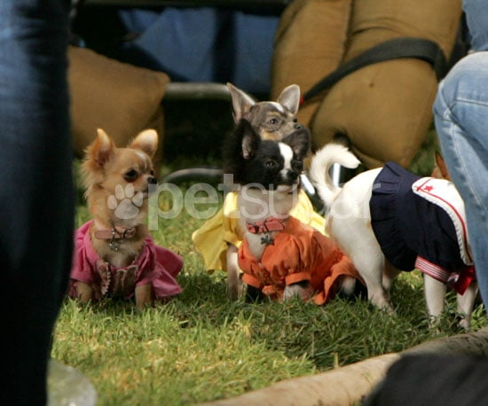 Behind-the-Scenes of Beverly Hills Chihuahua 2