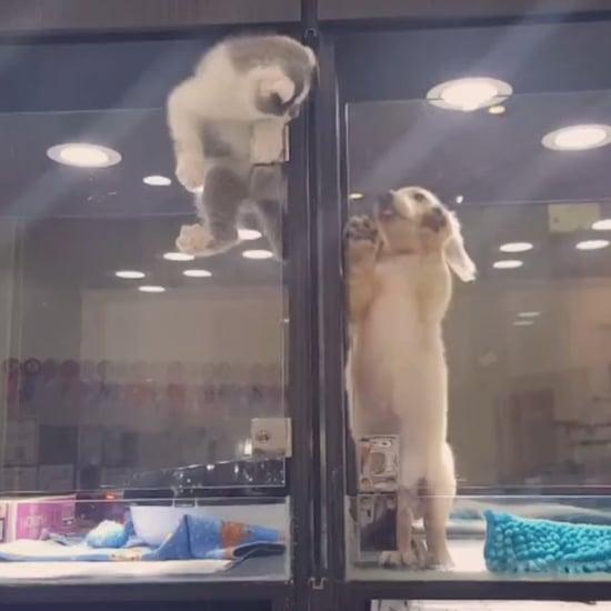 قط يهرب من الحجز للعب مع صديقه الجرو فقط