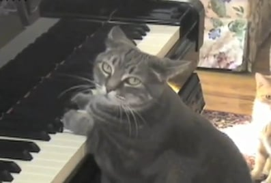 Nora the Piano Playing Cat Performs a Catcerto