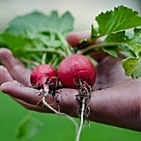 Share homegrown food with friends and family.