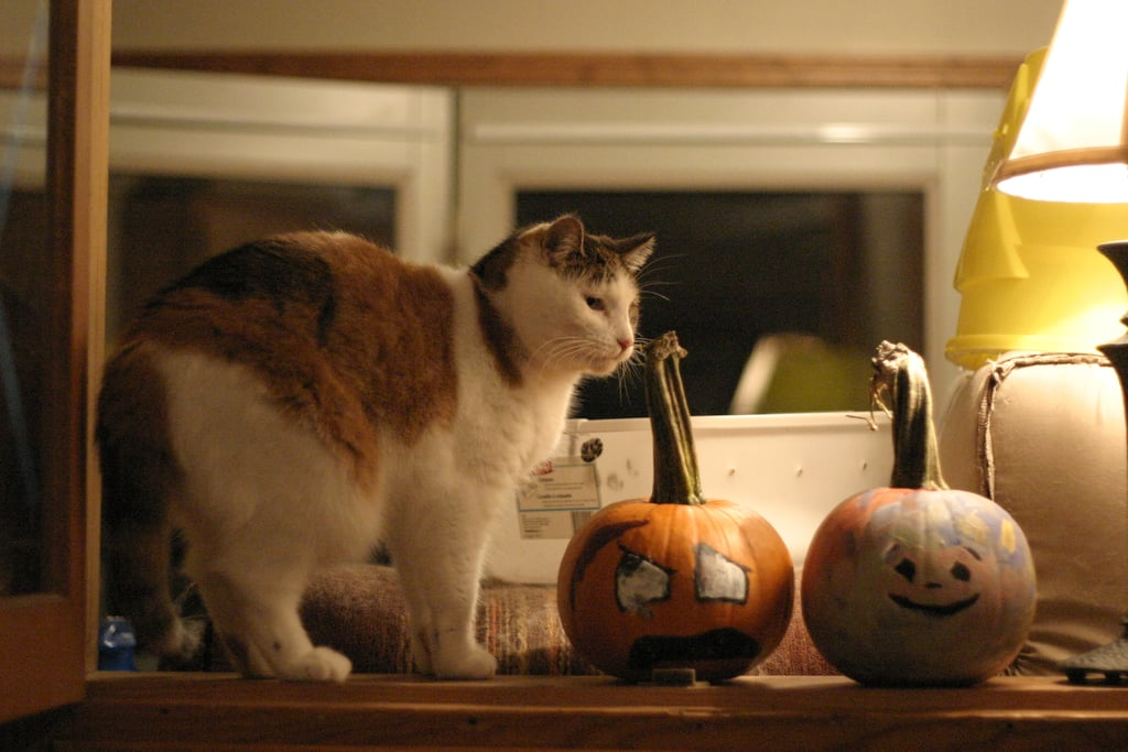 Pumpkins may infringe on your territory, but it's a temporary living situation. Enjoy the close quarters while they last! Source: Flickr user karindalziel