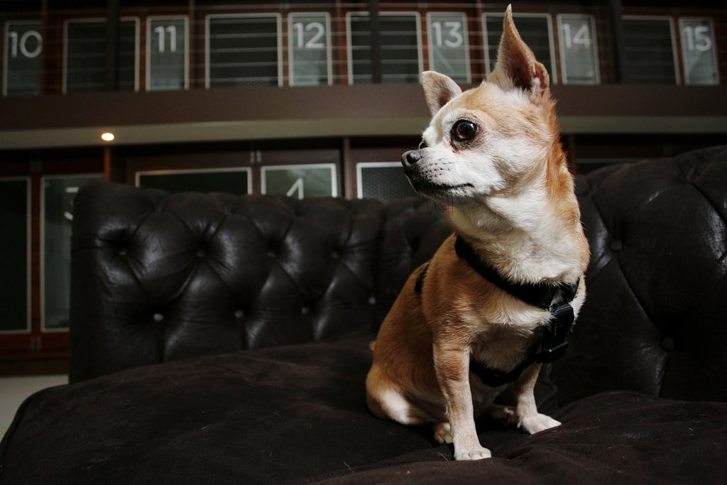 Out and About: Sydney's Swank PawPaws