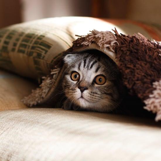 Is CBD Oil Safe For Pets?