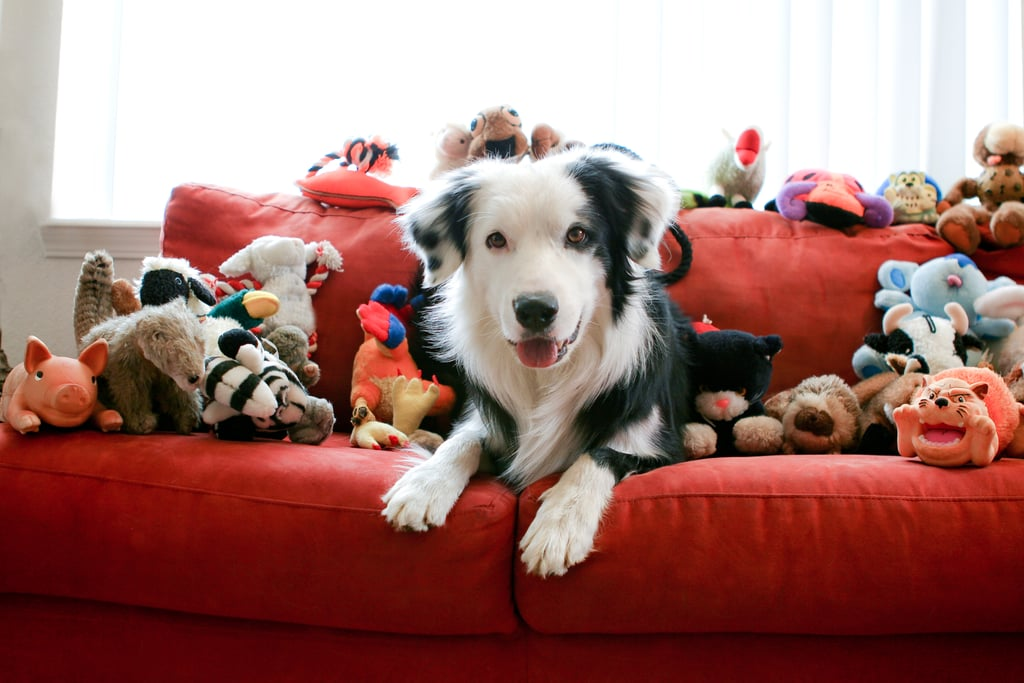 Helpful Products to Organize Your Pet's Clutter