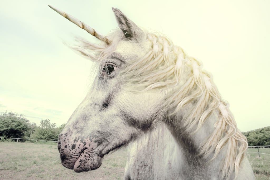 Scotland's Official Animal Is the Unicorn