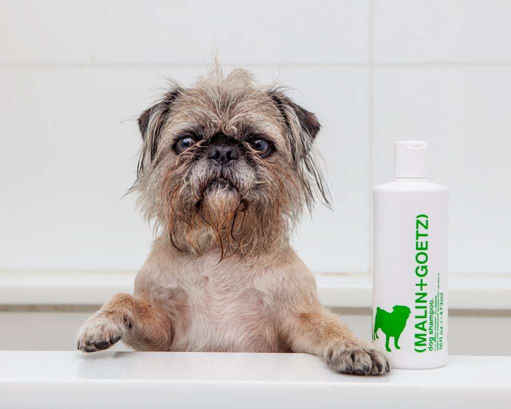 Malin + Goetz Dog Shampoo