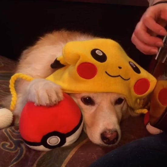 Dog Not Impressed With Pokemon Theme Song   Video