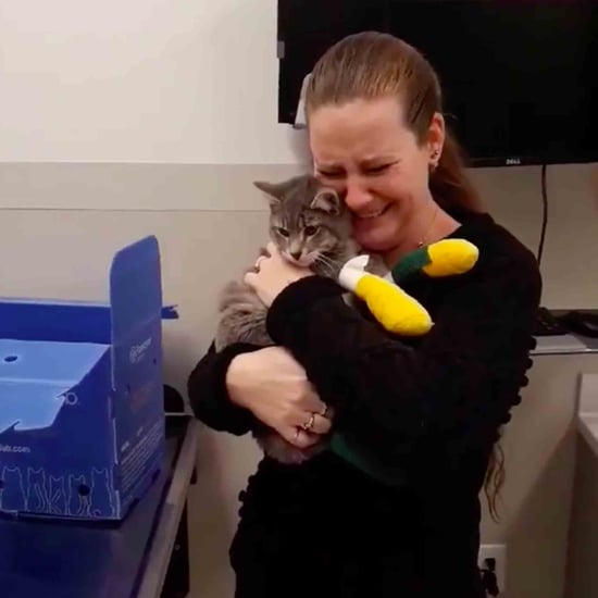 Video of Cat Being Reunited With Owner After Camp Fire