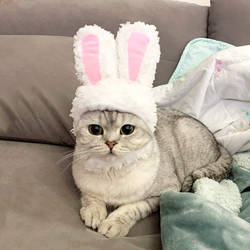 Bunny Ears For Cats