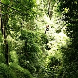 Zip-Line in the Rainforest of Costa Rica
