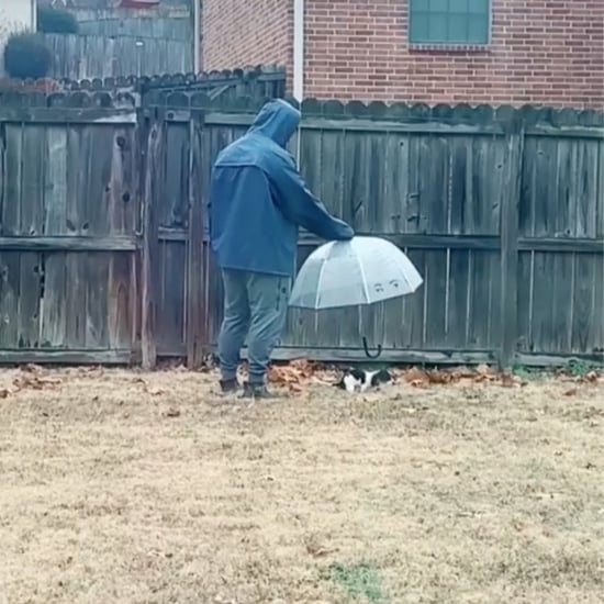 Man Follows Dog Around the Backyard With an Umbrella | Video