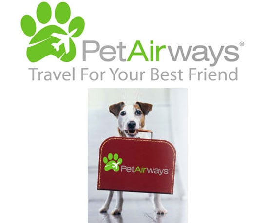 Pet Airways Hits the Furry Skies