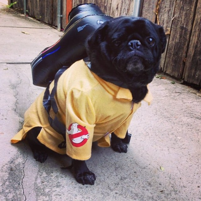 Ghost Pugster & Ghost Pugster | Creative Dog Costumes | POPSUGAR Tech Photo 5