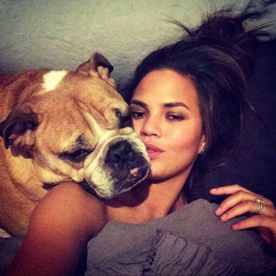 Chrissy Teigen's Dog Puddy Dies