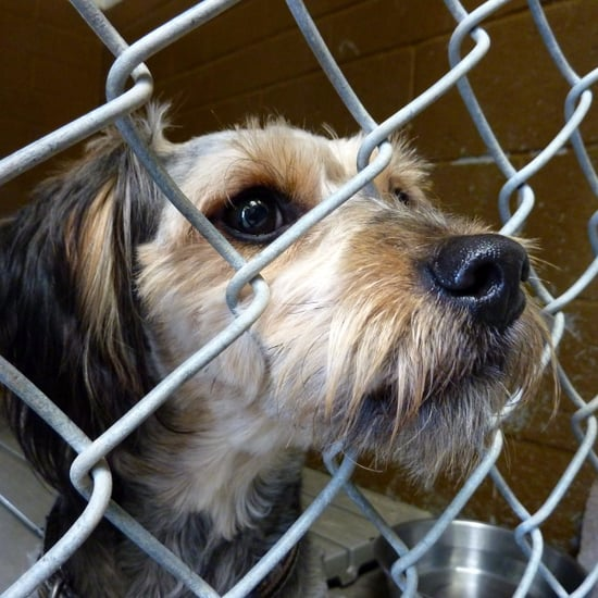 What Should I Donate to an Animal Shelter?