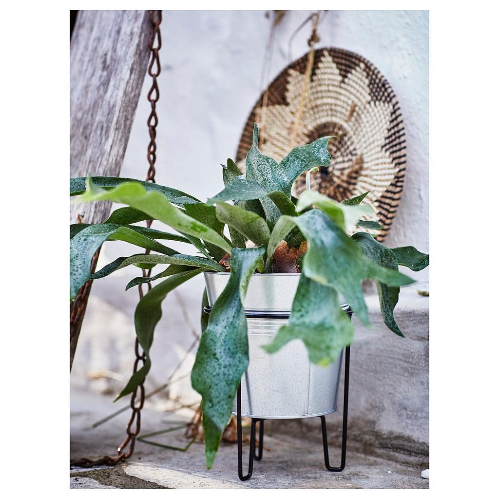 Svartpeppar Plant Stand