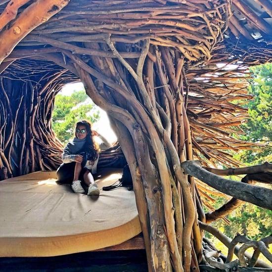 Giant Bird Nest at Big Sur Treebones Resort
