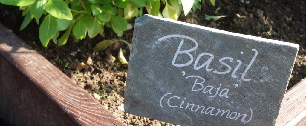 White House Kitchen Garden Tips