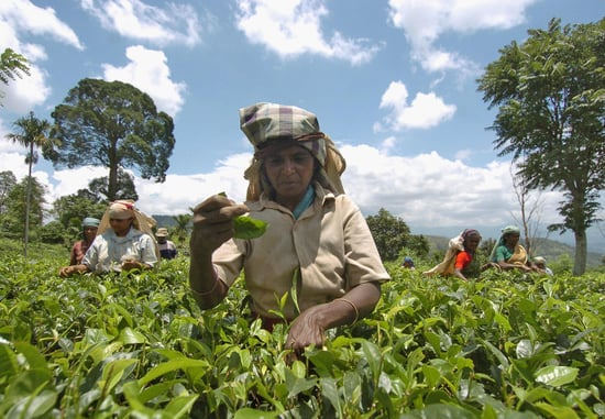 What Do You Know About the World's Coffee Production?