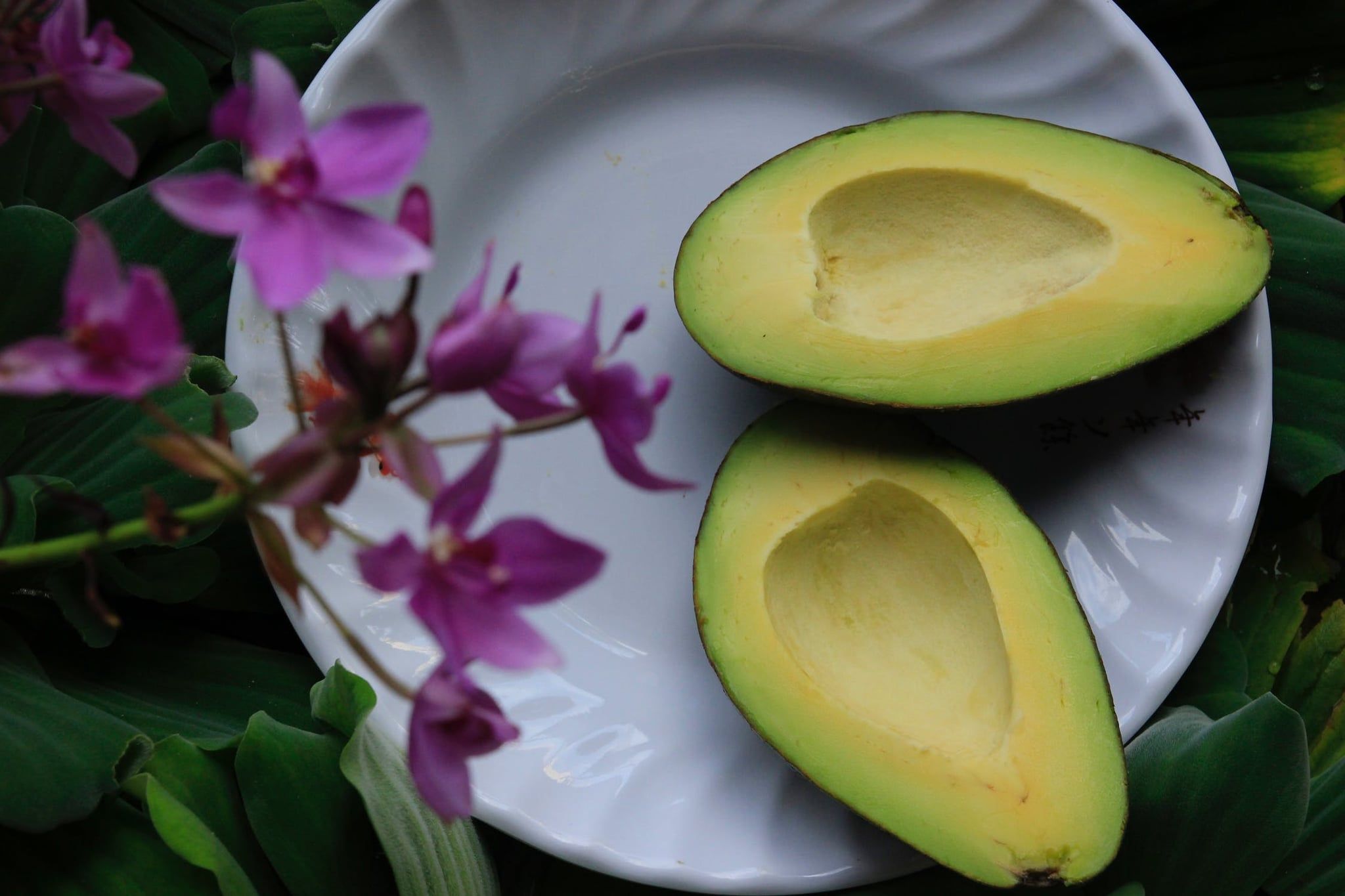 Here's How to Successfully Grow Your Own Avocado Tree