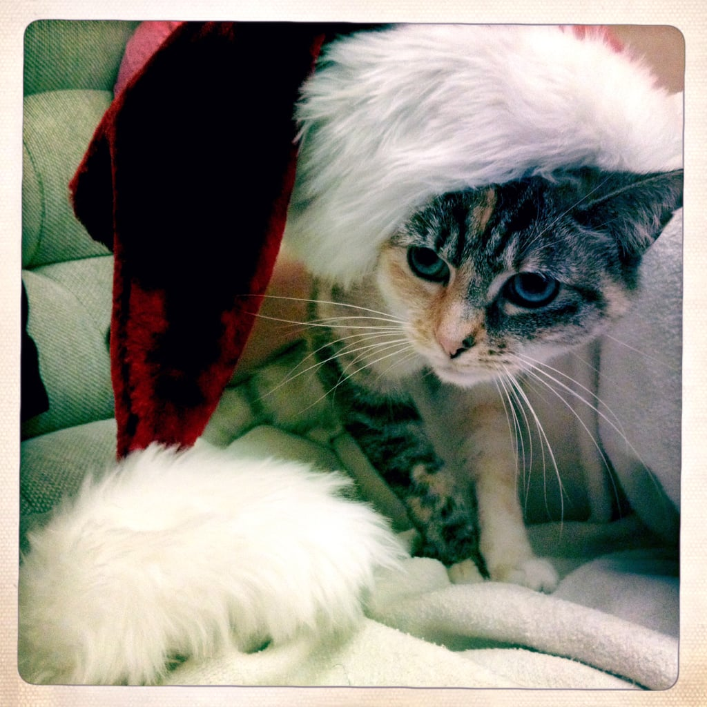 Relive the Season With Cheerful Holiday Pets
