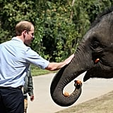 When William Got Up Close and Personal With an Elephant in China