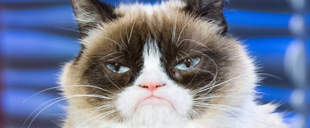 How Grumpy Cat Became a Feline Millionaire