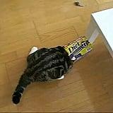 A Cat and Box Love Affair