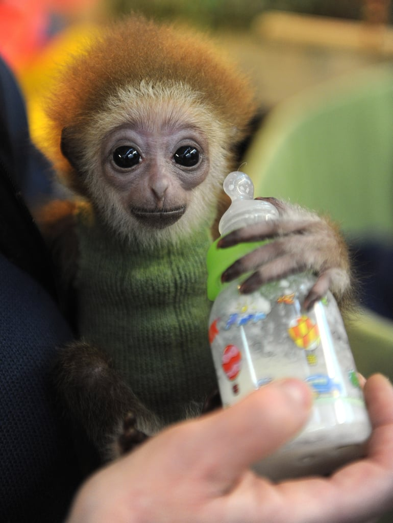 The Sloth Gets an Adorable Run For Its Money