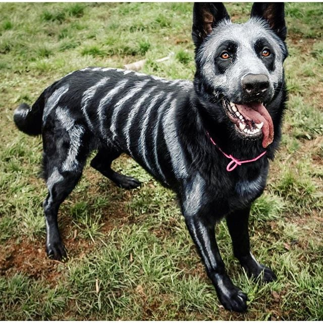 Diy halloween costumes for dogs popsugar australia smart living solutioingenieria Image collections