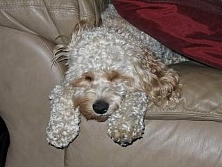 Sleepy Sammy