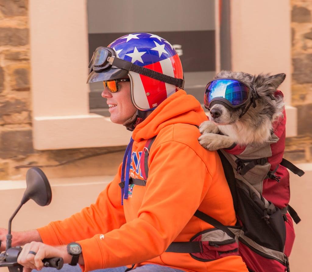 K9 Sport Sack Rover Dog Backpack
