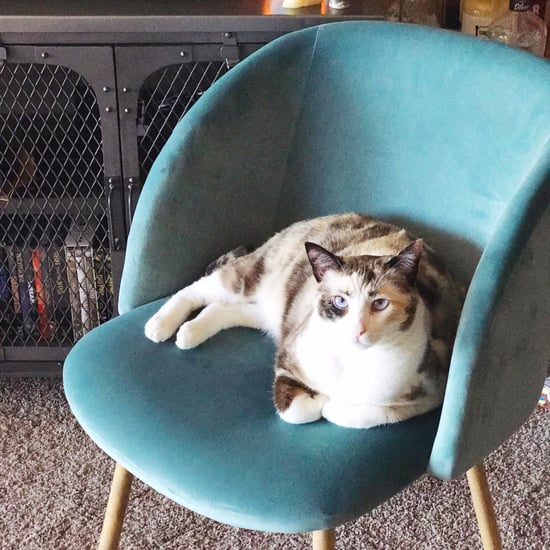 Is Amazon's Velvet Chair Actually Good?