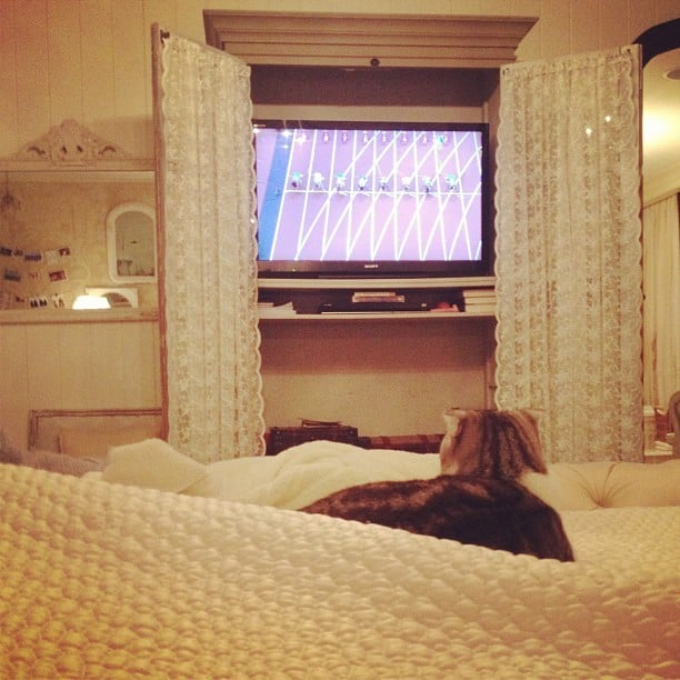 Taylor Swift's cat watched the Olympics on TV.  Source: Twitter user taylorswift13