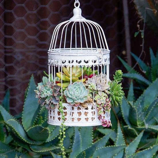 Succulent Birdcages