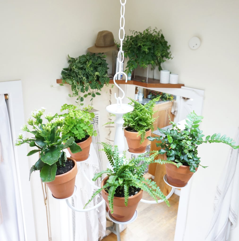 """""""I began decorating with plants and clippings when I decided that I didn't want to live a cluttered life,"""" says Whitney. If possible, forego items like bookends and trinkets, and fill their place with plants. You'll brighten your home and avoid accumulating excess belongings."""