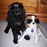 Indoor Sunglasses
