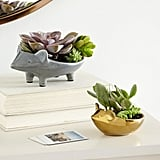 Ceramic Animal Planter, $19